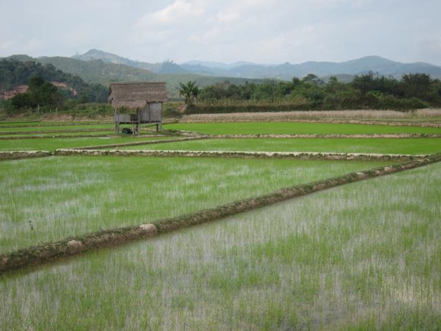 Into Laos (3/6)