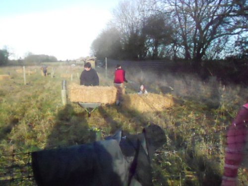 Mum shifts the bales around